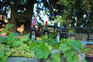 Τα κρασιά του κτήματος εμφιαλώνονται.